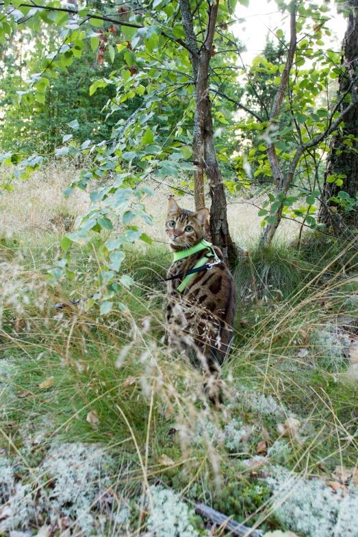 pablo metsässä